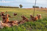 Hühner auf der Weide - 175531773