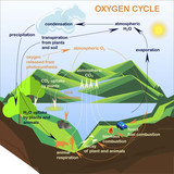 Scheme of the Oxygen cycle, flats design stock vector illustration - 175531781