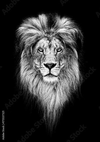 Portrait of a Beautiful lion, lion in dark - 175537321
