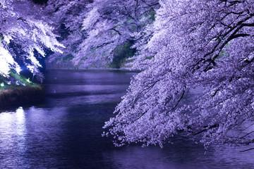 東京の春、千鳥ヶ淵、ライトアップ