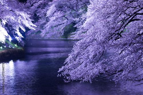 東京の春、千鳥ヶ淵、ライトアップ Poster