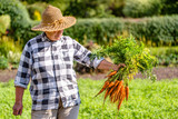 Woman gardener holding fresh carrots from the garden, vegetables from local farming, organic produce harvested at fall, healthy lifestyle hobby concept - 175560590