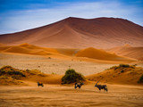 Contrasting Dune in the Afternoon Sun. Namibia Desert, Namibia - 175564345
