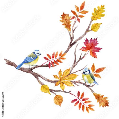 Watercolor fall tree branch - 175565300