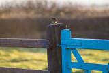 Bird in the morning - 175577911