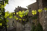 Fototapety Paese dell' Umbria con vite
