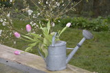 Tulip bouquet in a water can in the garden - 175580702