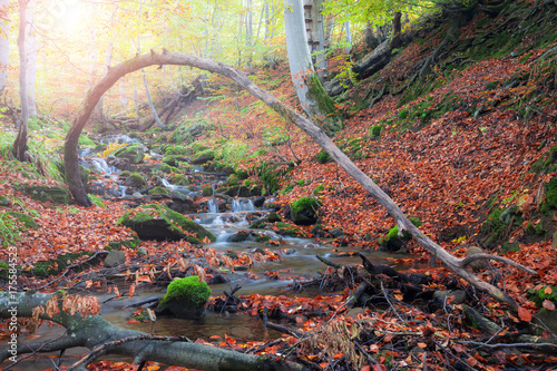 Tuinposter Herfst Autumn forest small creek