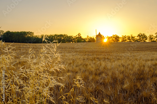 Fotobehang Beige Champ de blé, moulin a vent en arrière plan. Lever de soleil.