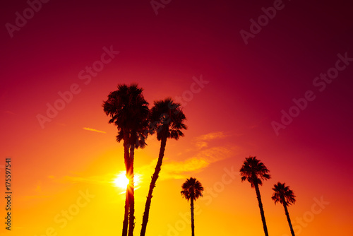 Foto op Plexiglas Bordeaux California palm trees silhouettes at vivid colorful summer sunset light