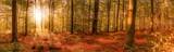 märchenhafter Herbstwald mit Sonne und Laub im breiten Panorama-Format