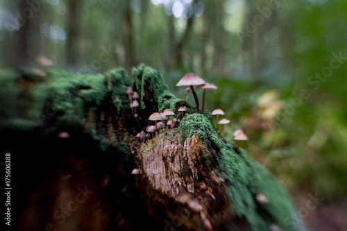 Aluminium Betoverde Bos Pilze auf abgestorbenen Baumstumpf