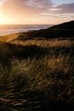 North sea sandy dunes in Denmark - 175622361