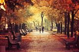 Autumn nature landscape. Footpath in the park - 175628712