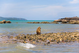 A lonely wild monkey sits on the shore of the ocean. - 175628726