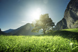 Idyllic landscape in the Alps, tree, grass and mountains, Switzerland - 175638969