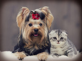 dog and cat - 175642949