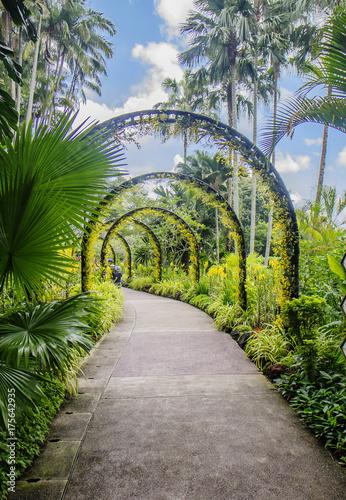 Сингапур. Ботанический сад. Poster