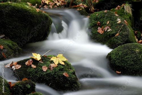 Tuinposter Bos rivier Kleine Ohe mountain stream and autumn leaves, Bayerischer Wald (Bavarian Forest), Bavaria, Germany, Europe