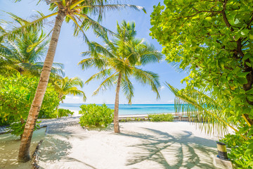 Beach scene. Tropical landscape design
