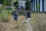 Spaziergang mit Hund - 175655568