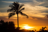 Palm Trees at an island sunset - 175679142