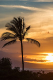 Palm Trees at an island sunset - 175679146