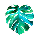 Palm tree leaf of Monstera  isolated. Watercolor illustration. Tropical element for your design. - 175697730