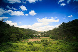 Large Processed Rice Field among Wild Tropical Jungle - 175698594