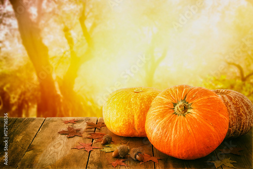 Fototapeta Pumpkins and autumn leaves on wooden table. thanksgiving and halloween concept