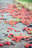 red berries on the footpath - 175725712