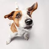 Little dog at studio