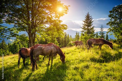 brudne-konie-wypasane-na-pastwisku-ktore-jest-oswietlone-przez-slonce-lokalizacja-miejsce-karpackie-ukraina-europa-swiat-piekna