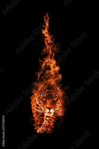 Fototapeta Leopard potrait animal kingdom collection with amazing effect