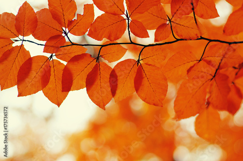Autumn leaves  background. - 175736572