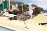 Close up of a seagull in the beach - 175741906