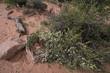 Sandstone Country Wildflower