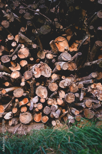 Pile of logs. Countryside logs in a field Poster