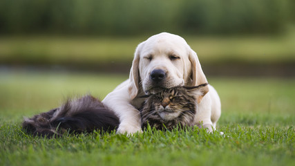 best friends. Puppy with cat