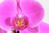 Orchidee Grußkarte