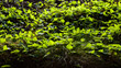 Forest floor vegetation illuminated by sunlight