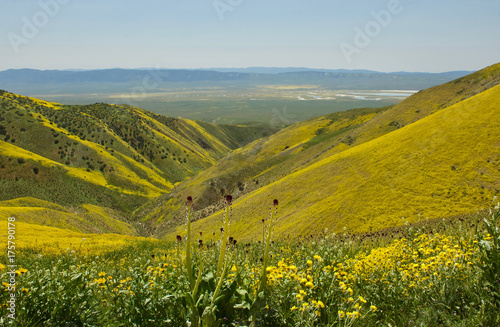 Poster Honing magnificent wildflowers at Carrizo Plain National Monument