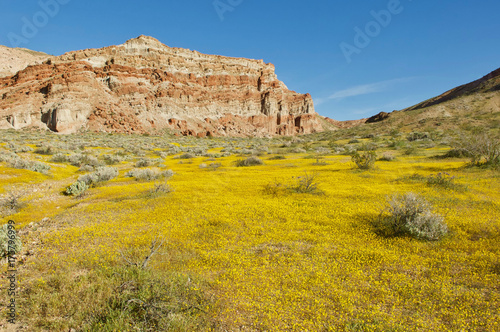Spoed canvasdoek 2cm dik Meloen wildflowers at Red Rock Canyon State Park