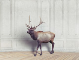 deer in the room - 175797904