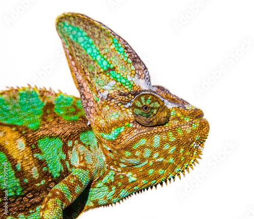 Fotobehang Kameleon chameleon photo