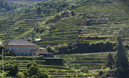 Staande foto Grijze traf. Landscape view of a vineyard in the valley of Douro, Portugal