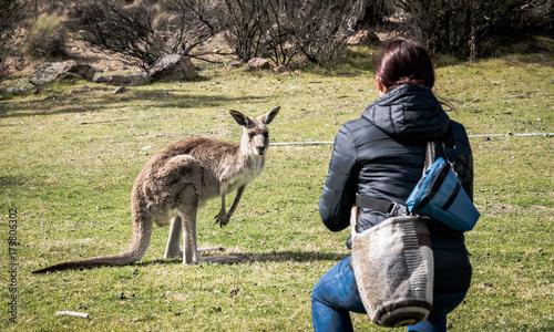 Aluminium Kangoeroe Woman feeding wild kangaroo in Australia