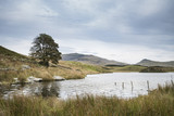 Evening landscape image of Llyn y Dywarchen lake in Autumn in Snowdonia National Park - 175808500