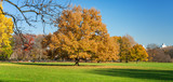 Central park in New York City at sunny autumn day, USA - 175820115
