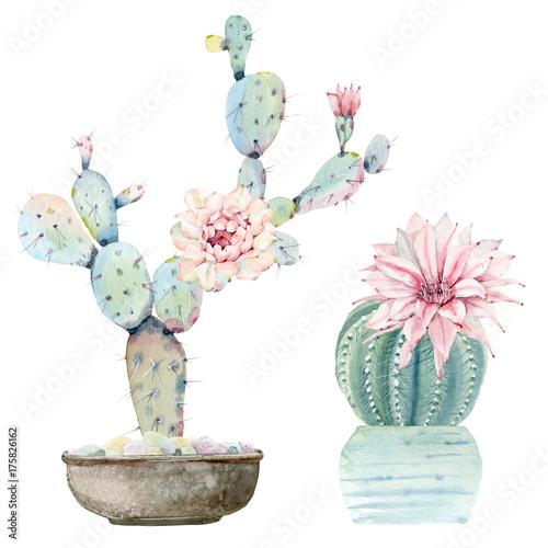Hand drawn watercolor saguaro cactuses - 175826162